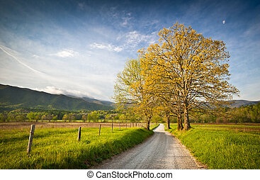 山, 車道, 泥土, cade's, 冒煙, hyatt, 公園, 小海灣, 早晨, 偉大, 春天, 國家, 路