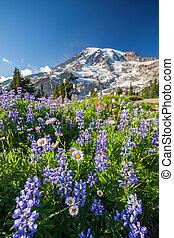 山, 野生の花, より雨が多い