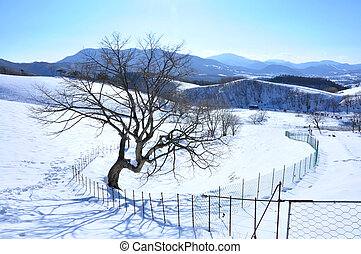 山, 韓国南, 雪が多い