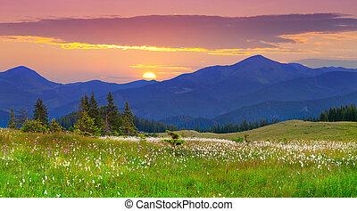 山。, 風景, 美しい, 日の出, 夏