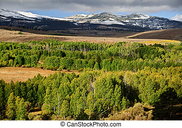 山, 风景, 风景, 绿色的森林