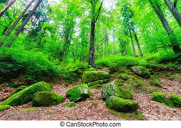 山, 魔法, 木, 岩, krkonose, 森林, こけ, カバーされた, ポーランド語