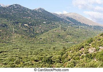 山, crete., 密集している, 森林, 島