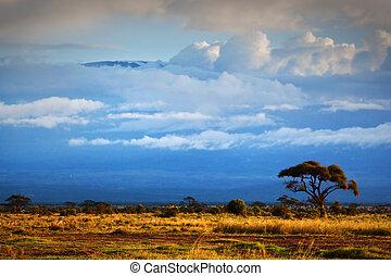 山, kilimanjaro., サバンナ, 中に, amboseli, kenya