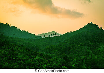 山, rainforest