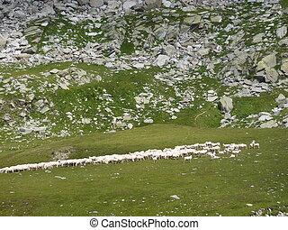 山, sheeps, 谷