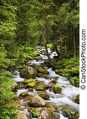 山, tatra, 流れ, 森林