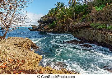 岩が多い, 嵐である, 入り江, 木, やし, 海