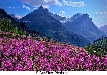 岩が多い, 牧草地, 高山, 山。, 野生の花
