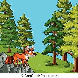 岩石, 狐狸, 站立, 場景