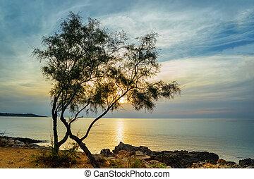 岩石, shore., 松樹, 海岸, 傍晚, sea., mallorca