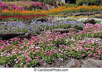 岩, 多色刷り, 庭, 花