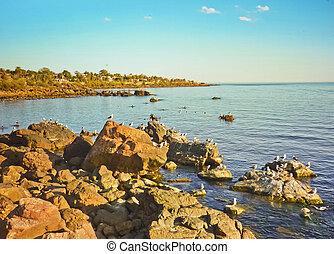 岩, ans, カモメ, piriapolis, 海岸