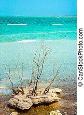 島, 塩, 絵のよう