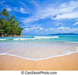 島, 浜, ヤシの木, 海洋