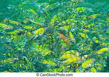 島, phi, fish, 海, タイ