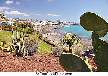 島, torviscas, カナリア, tenerife, playa.
