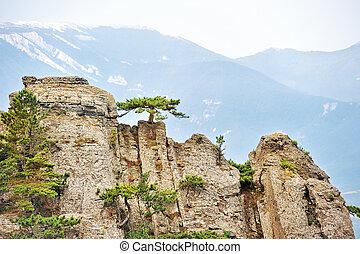 崖, 急, 松の木