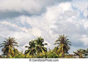 嵐の空, 木, トロピカル, やし, モンスーン