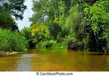 川, 中に, ∥, 森林