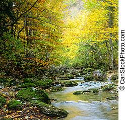 川, 中に, 秋の森林