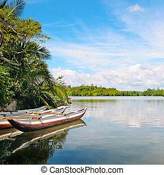 川, 娯楽用ボート, rainforest