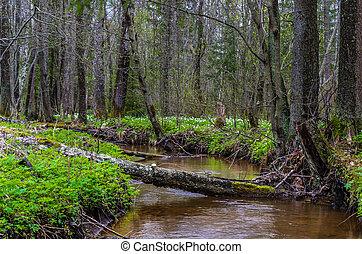 川, 森林, 光景