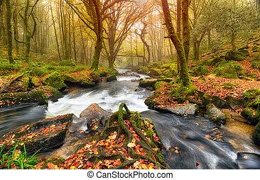 川, autum, 森林