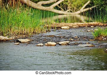 川, forest., 光景