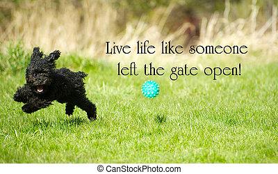 """左, インスピレーションを与える, のように, 破れる, 幸福に, """"live, 生活, fullest, open"""", 愛らしい, 門, おもちゃ, summer., プードル, のまわり, 誰か, 言葉, 楽しむ"""