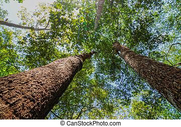 巨人, トランク, 木, の上, 見る, thailand., rainforest, おおい