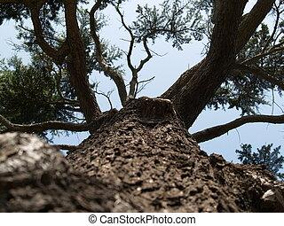 巨人, 木の幹