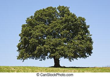 巨人, 樹