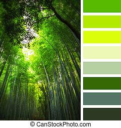 巨人, 竹, パレット