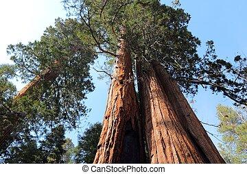 巨大的红杉, 国家的纪念碑