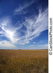 巨大, sawgrass, 大草原