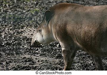 巴西人, 貘