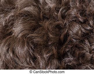巻き毛, 犬, 毛, 手ざわり