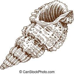 巻き貝の殻殻