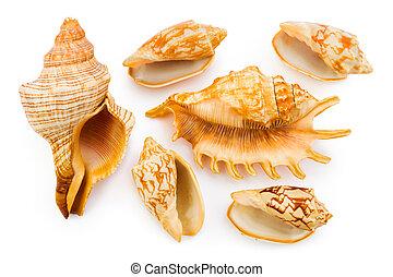 巻き貝の殻, 海