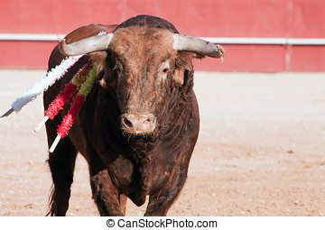 布朗, 西班牙, 頭髮, 帶紅色, 公牛