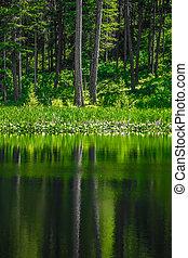 常緑樹, 反映, 湖の 森林