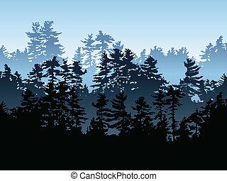 常绿植物, 森林
