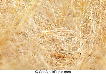 干し草, 背景