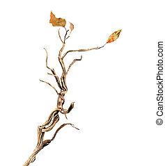 干燥的枝條