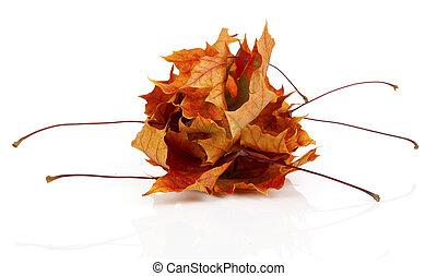 干燥, 秋季离去, 被隔离, 在懷特上, 背景