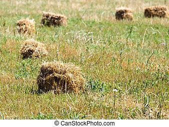 干草, 捆綁, 領域