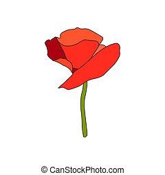 平ら, スケッチ, 花, stem., petals., style., full-blown, 赤いポピー, ビュー...