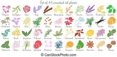 平ら, セット, 有色人種, 大きい, 44, オイル, plants., 必要, スタイル
