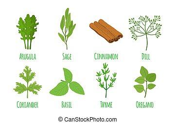 平ら, 有機体である, 漫画, ハーブ, ベクトル, 緑, condiment., style., spices.